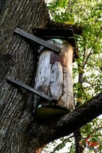 Вулик диких бджіл в парку Олевська
